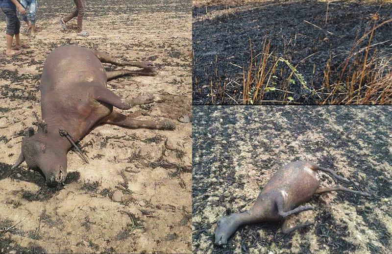 حرائق متتالية بإقليم سطات تدمر أزيد من 500 هكتار من الحبوب وتحرق عددا كبيرا من الأغنام