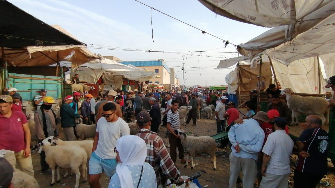 روبرتاج: مشاهد من سوق بيع الاغنام بسطات.. شناقة ، شهود زور ومتربصون بالجيوب